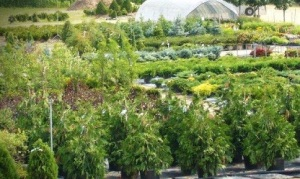 The Benefits of Purchasing Trees and Plants from Local Nursery Centers